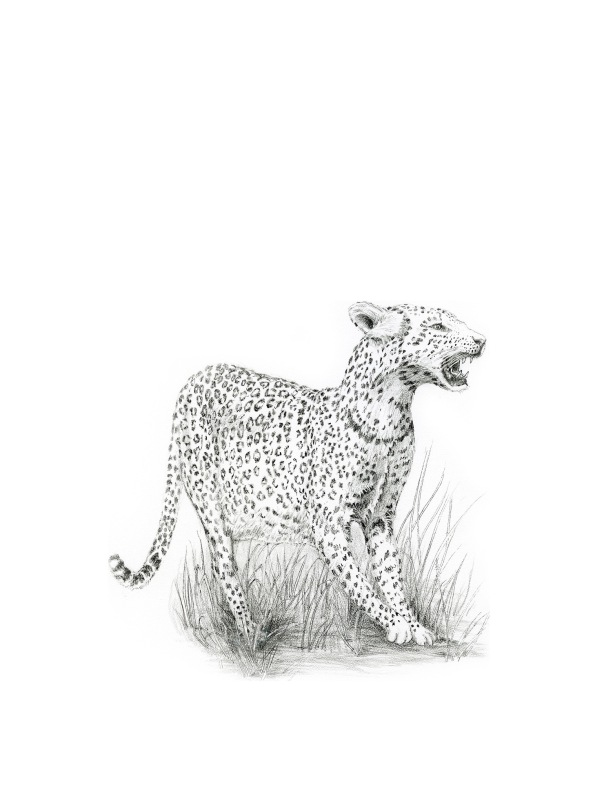 LeopardEdit