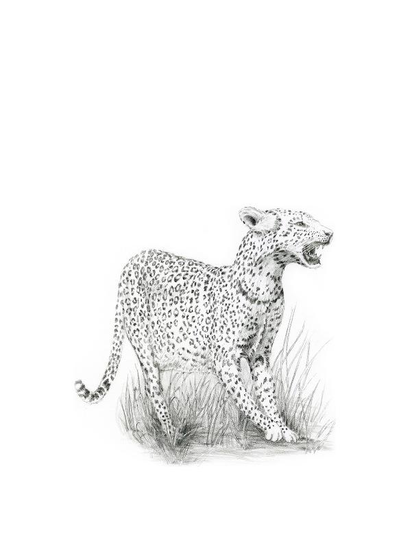 LeopardEdit